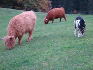 Milka und Riona mit Ziege Snoopy auf der Weide